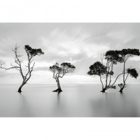 Papier peint panoramique Trees in the Still Water DD118930 A.S. Création Designwalls