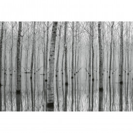 Papier peint panoramique Birch Forest in the Water DD118946 A.S. Création Designwalls