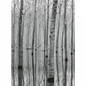 Papier peint panoramique Birch Forest In The Water DD119083 A.S. Création Designwalls